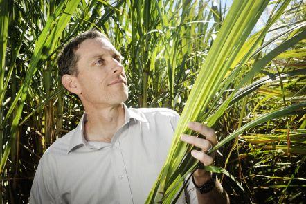 Professor Ian O'Hara holding sugar cane