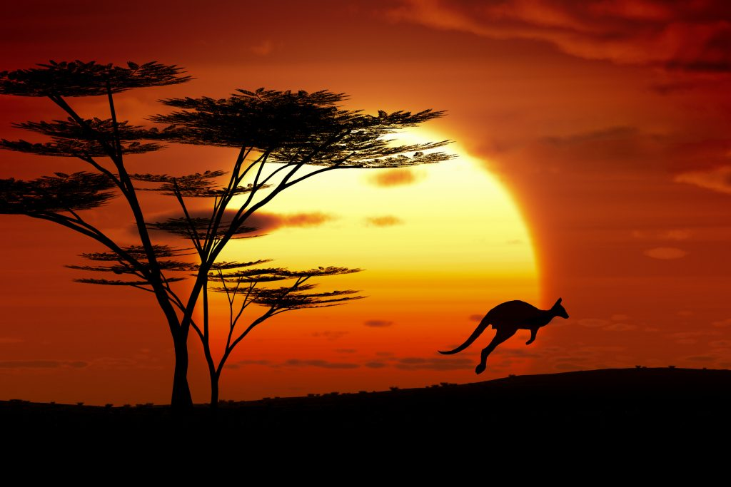 Silhouette of a kangaroo skipping with the sun setting in the background