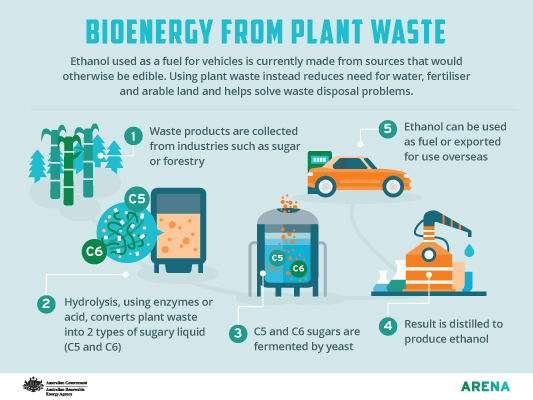 Infographic: Bioenergy from plant waste