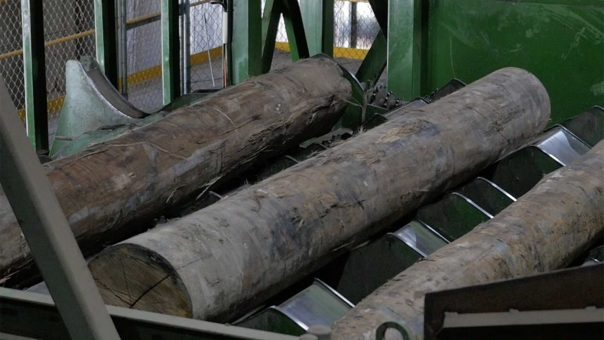 Boral could turn sawmill residue into renewable diesel