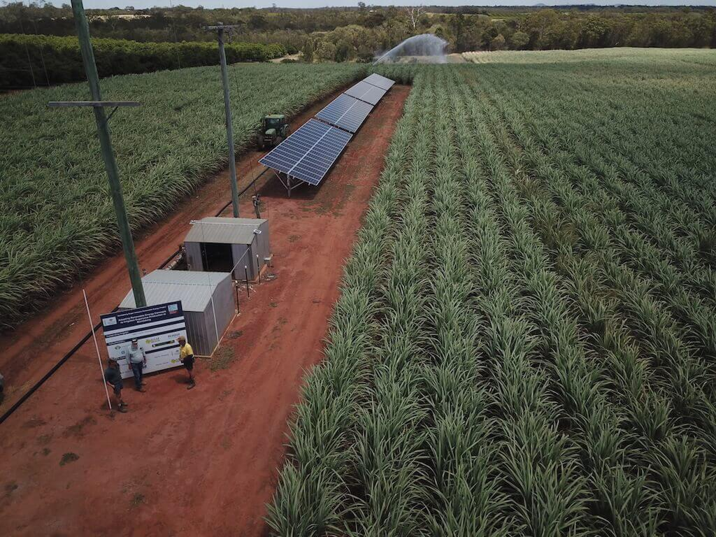 Solar panels setup on sugarcane farm